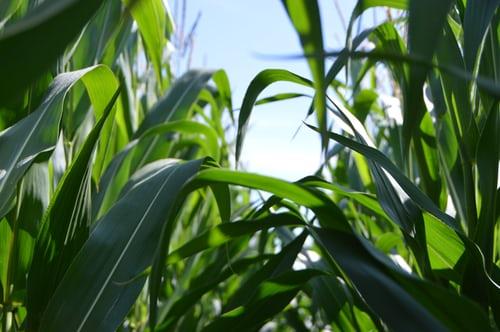 کودهای کشاورزی فصل تابستان